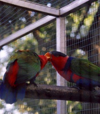 Jardim Botanico (nahrál: admin2)
