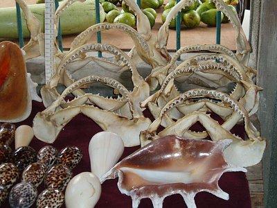 mušle a žraločí zuby (nahrál: admin)