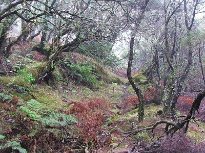 Vřesovcový prales - Vlhká krása, počítejte ale s chladem a mokrem i v botech při výletech. (nahrál: Kateřina Chamoutová)