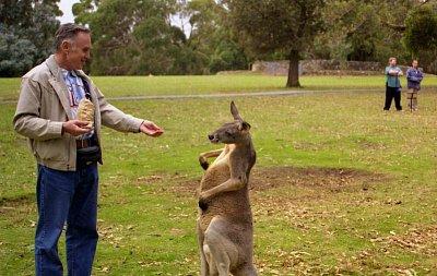 Cleland Wildlife Park - Národní park na Mt. Lofty nad Adelaide. U vchodu do parku si návštěvníci mohou koupit granule, kterými potom krmí klokany (nahrál: Luboš)
