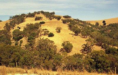 Bethany - Okolní krajina v Barossa Valley u vinice Bethany (nahrál: Luboš)